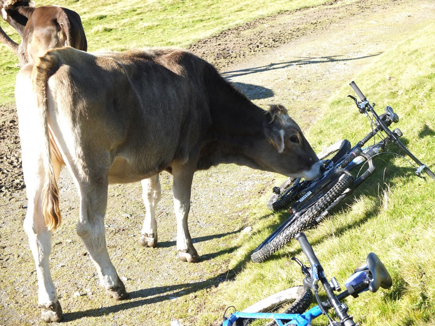 _vegan_cycling