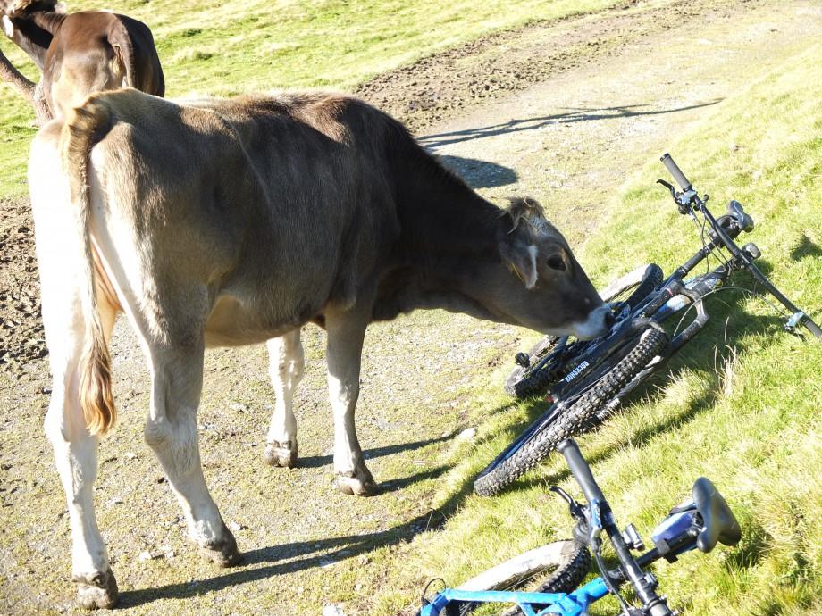 Als Mountainbiker vegan leben – geht das?